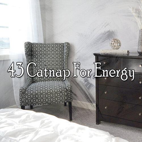 43 Catnap For Energy