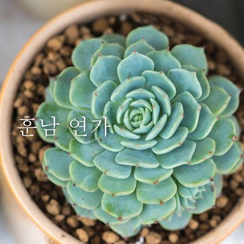 暖男情歌 - 韓國獨立音樂合輯