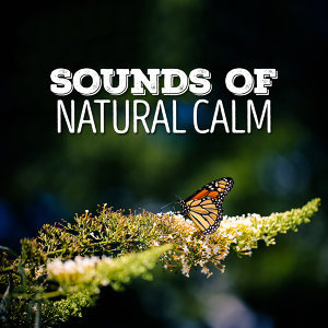 Sounds of Natural Calm