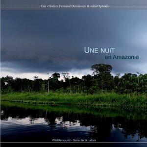 Naturophonia: Une nuit en Amazonie