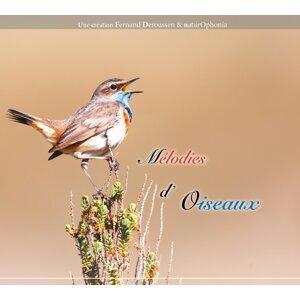 Naturophonia: Mélodies d'oiseaux