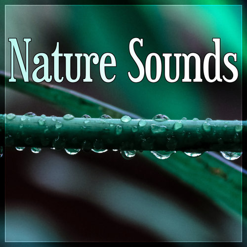 Nature Sounds - Sound Therapy for Stress Relief, Relax Your Brain, Finest Chillout & Lounge Music, Massage, Reiki
