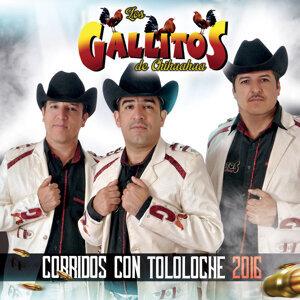 Corridos Con Tololoche 2016