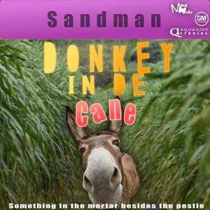 Donkey in De Cane