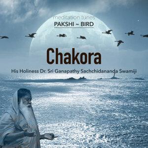 Meditation Tunes - Pakshi / Bird - Chakora