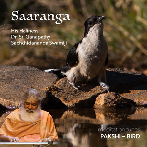 Meditation Tunes - Pakshi / Bird - Saaranga