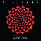 Blown Rose