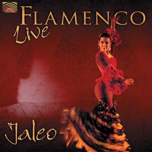 Jaleo: Flamenco Live