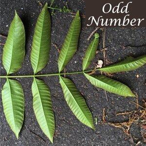 Odd Number (Odd Number)