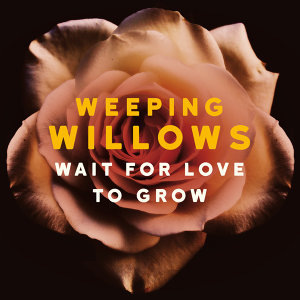 Wait for Love to Grow