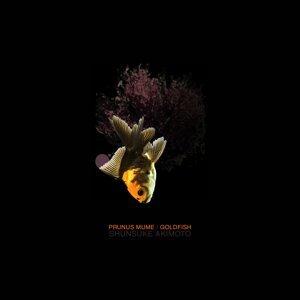 Prunus mume / Goldfish