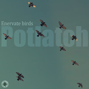 Enervate Birds