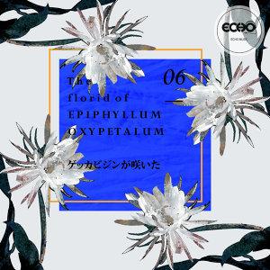 花語 : 曇花 The florid of Epiphyllum Oxypetalum