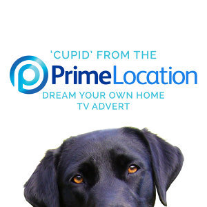 """Cupid (From the Prime Location """"Dream Your Own Home"""" T.V. Advert)"""