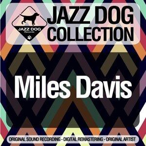 Jazz Dog Collection