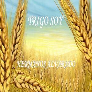 Trigo Soy