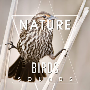 Nature Birds Sounds – Calming Sounds, Singing Birds, Sounds of Forest, Rest a Bit, Free Time