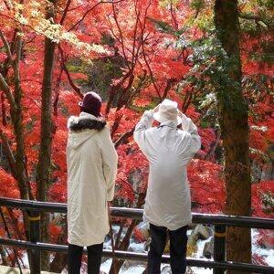 Autumn of Fukushima (Mt.Mizuishi)