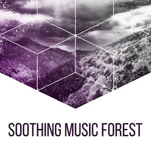Soothing Music Forest – Nature Sounds for Relaxation, Classical Guitar, Birds Singing, Soft Melodies, Pure Mind, Sounds of Forest, Deep Sleep