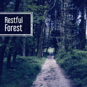 Restful Forest – Nature Sounds for Relaxation, Singing Birds, Rest with Nature, Peaceful Mind, Calmness