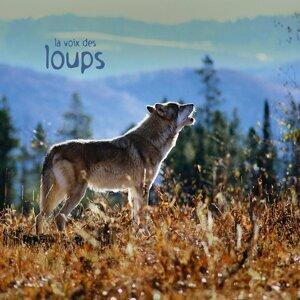 La voix des loups - Wolves