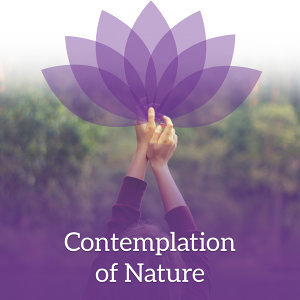 Contemplation of Nature – Pure Mind, Nature Sounds for Relaxation, Meditation Music, Stress Relief, Reiki Music, Relaxing Waves, Deep Focus
