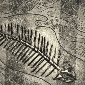 Koiruohobluesband