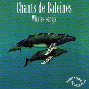 Chants de baleines - One Full Hour of Whales Songs