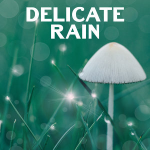 Delicate Rain – Soft Music for Relaxation, Nature Sounds, Relief, Deep Sleep, Pure Mind, Soothing Guitar