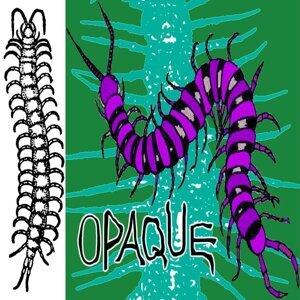 Secret Domain Of Giant Centipede
