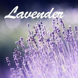 Lavender (薰衣草:等待愛情)