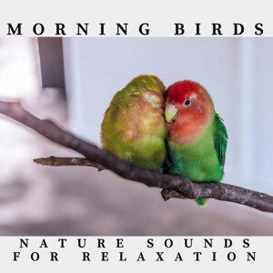 Morning Birds Nature Sounds
