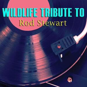 Wildlife Tribute to Rod Stewart