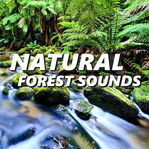 Inviting Tropical Rainforest Sounds-Natural Forest Sounds-KKBOX