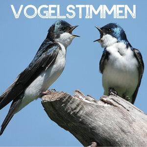 Vogelstimmen - Entspannungsmusik, Natur und Meditation