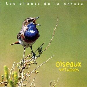 Les chants de la nature : Oiseaux virtuoses