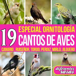 Canarios del Mundo. El Canto de 11 Razas de Canario Canaricultura Serinus Canaria