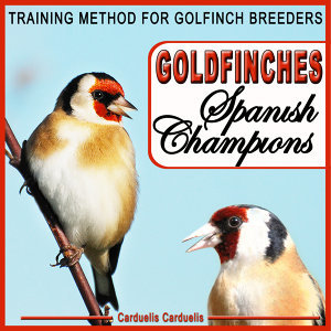 Goldfinches Spanish Champions. Training Method for Goldfinch Breeders - Carduelis Carduelis -