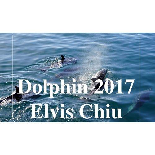 Dolphin 2017 (海豚 2017)