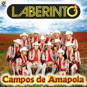 Campos De Amapola - Laberinto