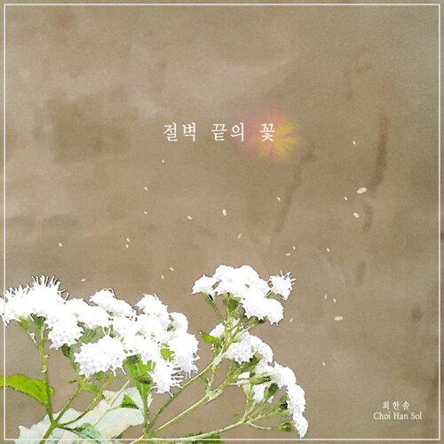 절벽 끝의 꽃