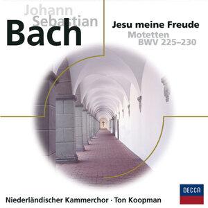 Bach Motetten BWV 225 - 230 - Eloquence