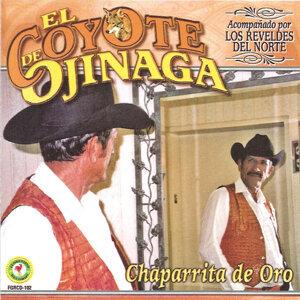 Chaparrita De Oro