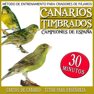 Metodo de Entrenamiento para Criadores de Pajaros Canarios Timbrados Campeones de España, Cantos del Canario Tutor para Enseñanza