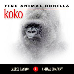 Koko - Fine Animal Gorilla