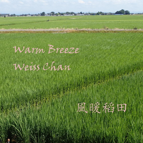 风暖稻田 (Warm Breeze)