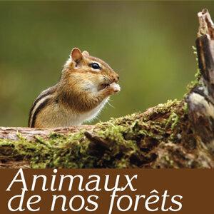 Animaux de nos forêts