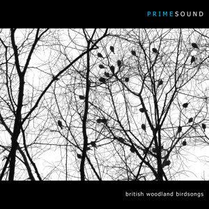 British Woodland Birdsongs
