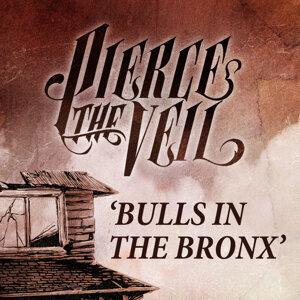 Bulls in the Bronx