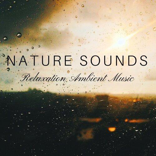 Nature Sounds Balance - Nature Sounds: Rain, Calming Ocean
